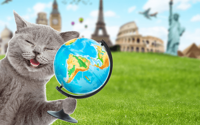 Cats Rule the World and They Know it